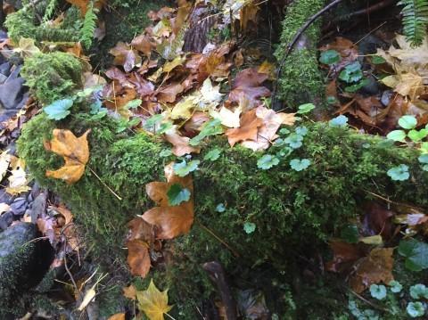 秋のトレッキング   大滝_e0115904_12410302.jpg