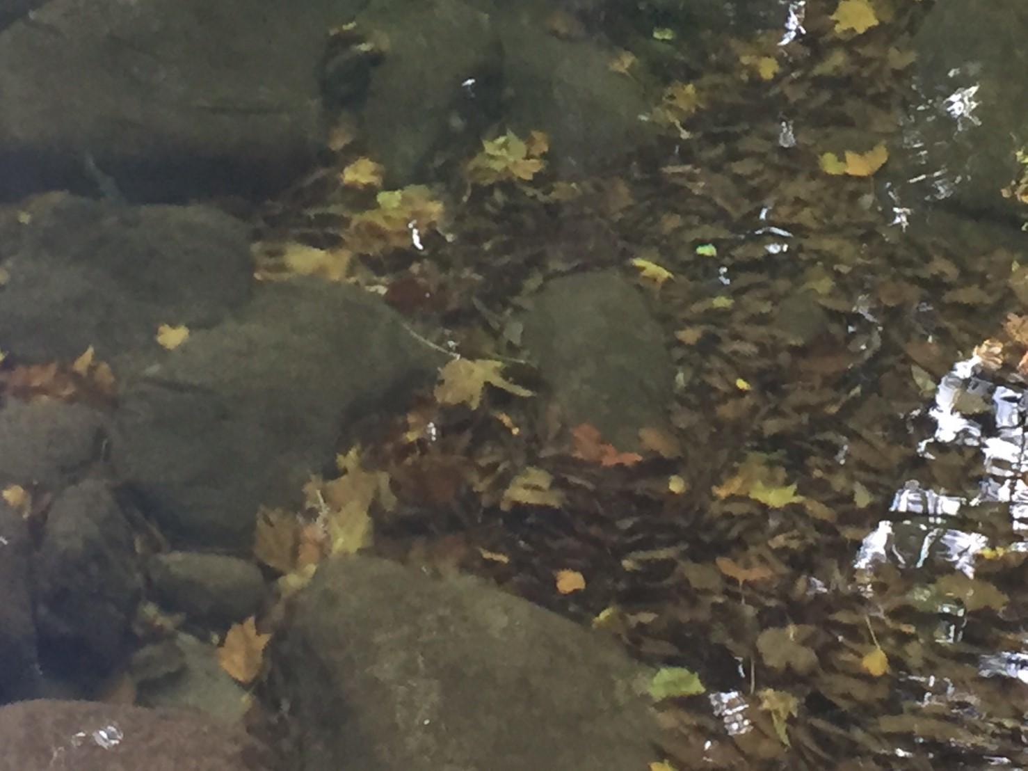秋のトレッキング   大滝_e0115904_12421737.jpg
