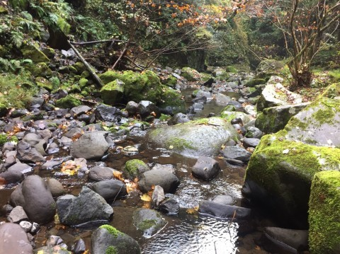 秋のトレッキング   大滝_e0115904_12430329.jpg