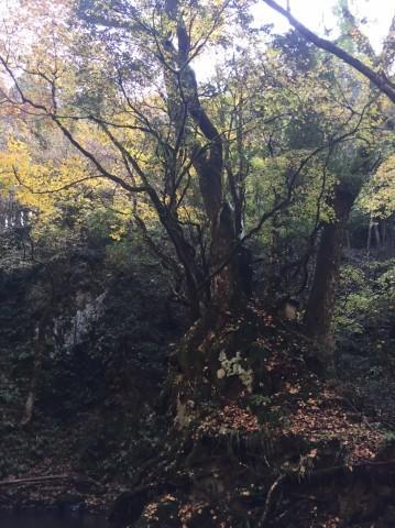 秋のトレッキング   大滝_e0115904_13160978.jpg