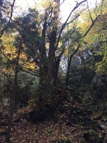 秋のトレッキング   大滝_e0115904_13161055.jpg