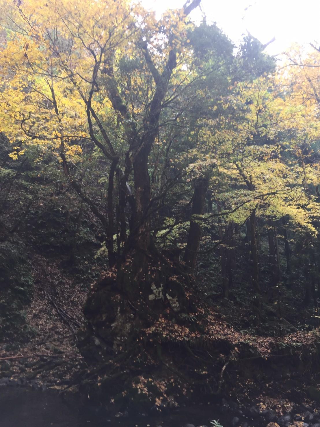 秋のトレッキング   大滝_e0115904_13192361.jpg