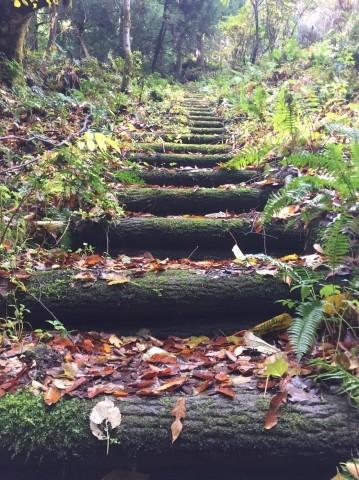 秋のトレッキング   大滝_e0115904_14133669.jpg