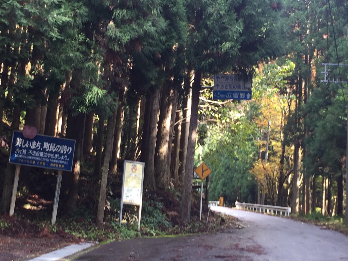 秋のトレッキング   大鹿滝_e0115904_15241003.jpg