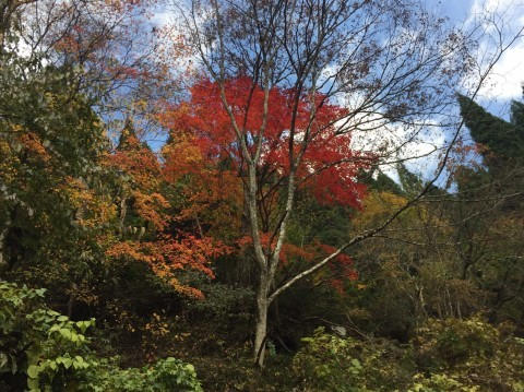 秋のトレッキング   大鹿滝_e0115904_15270254.jpg
