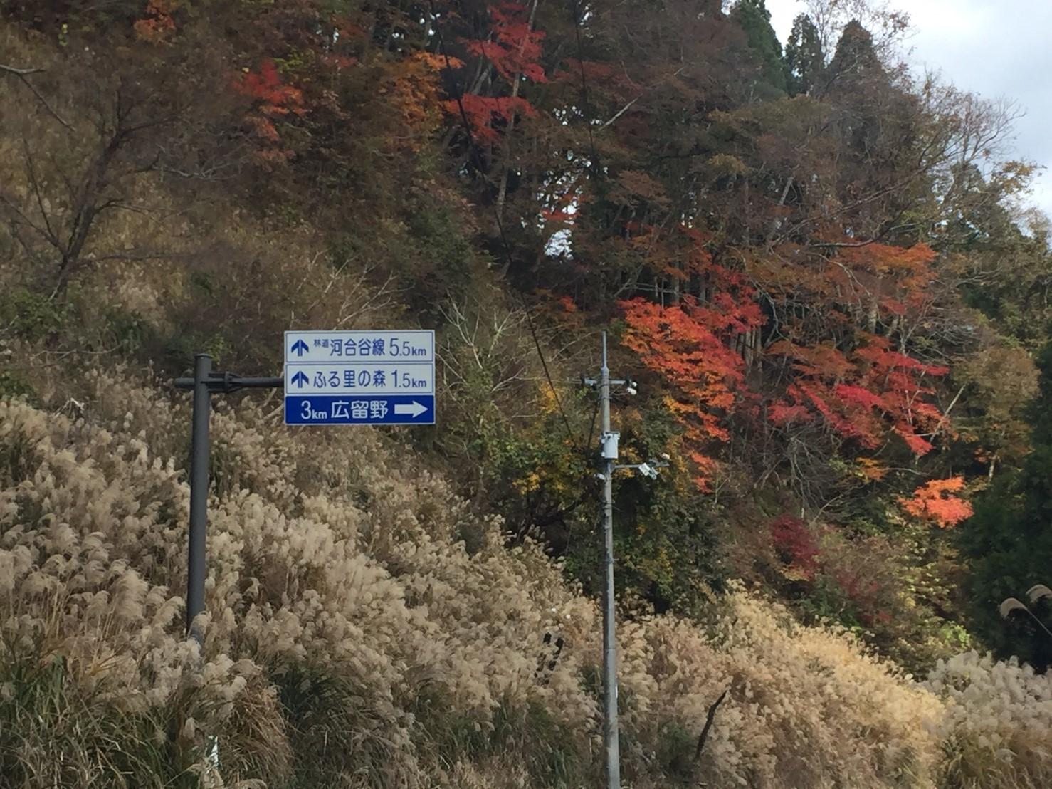 秋のトレッキング   大鹿滝_e0115904_15291982.jpg