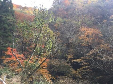 秋のトレッキング   大鹿滝_e0115904_15291998.jpg
