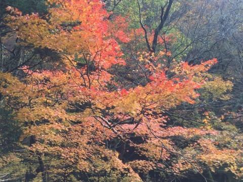秋のトレッキング   大鹿滝_e0115904_15292007.jpg