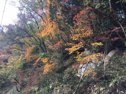 秋のトレッキング   大鹿滝_e0115904_15292046.jpg