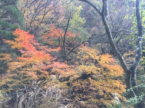 秋のトレッキング   大鹿滝_e0115904_15292090.jpg