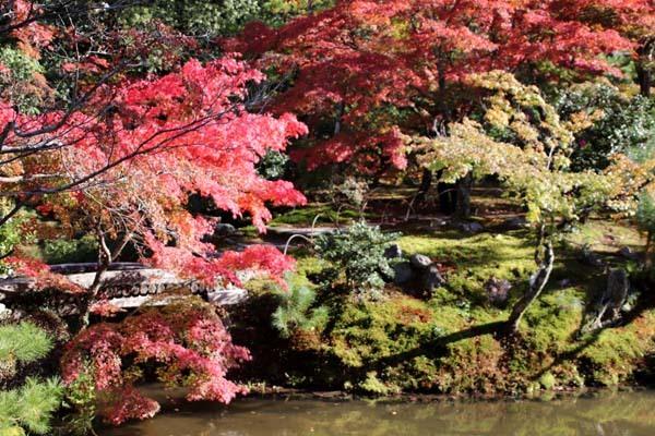 紅葉の盛り 等持院_e0048413_20552048.jpg