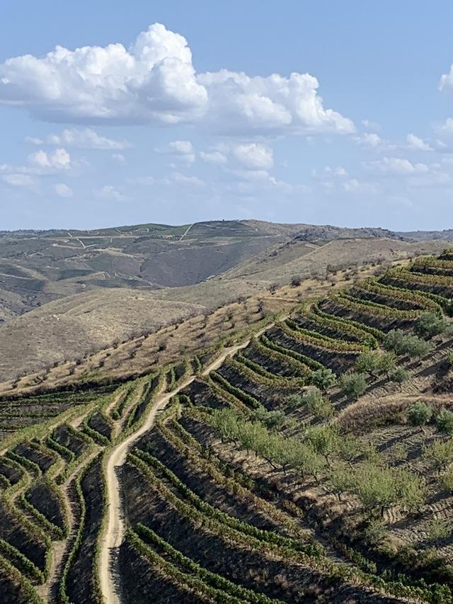 ワインの輸入販売を開始しました。_c0213220_4134299.jpg