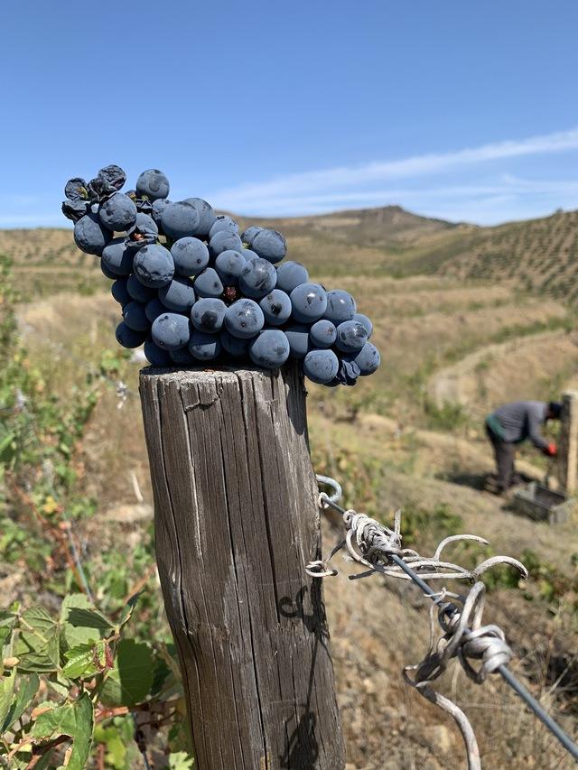 ワインの輸入販売を開始しました。_c0213220_481063.jpg