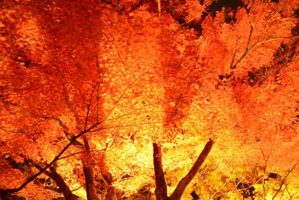 1丁目の紅葉夜景_e0373930_23144613.jpg