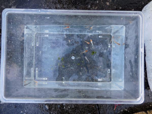 迷子容器も冬支度へ と 失敗の出目ダルマ_e0097534_17543513.jpg