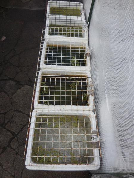 迷子容器も冬支度へ と 失敗の出目ダルマ_e0097534_17555110.jpg