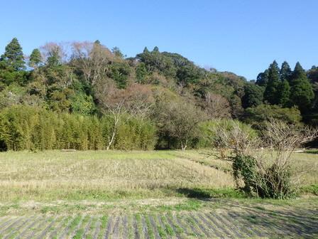 立冬も過ぎて、寒い空気が来ました。_a0123836_17144370.jpg