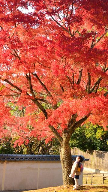 奈良公園の紅葉_d0152544_16190605.jpg