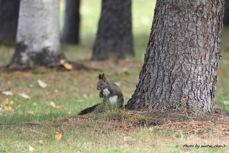 エゾリス  Hokkaido Squirrel_c0070654_08542246.jpg