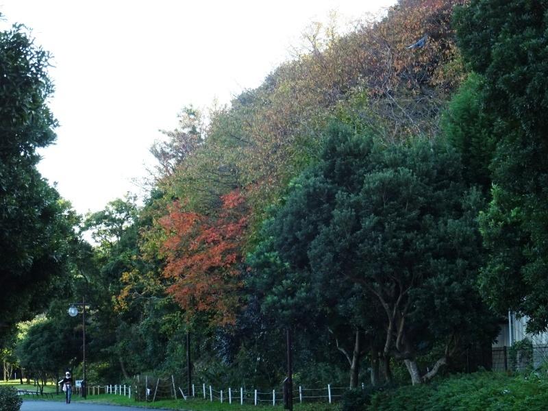 木の伐採は 楽しい作業・・・うみべの森_c0108460_15335448.jpg