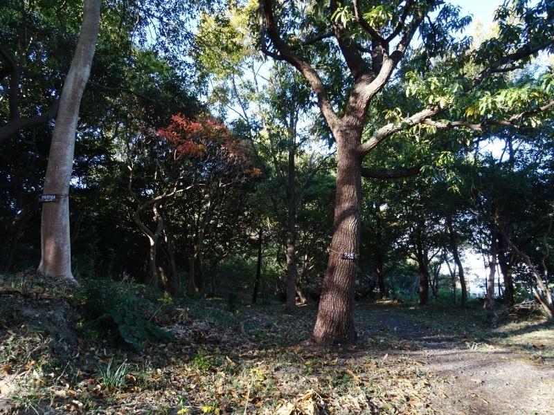 木の伐採は 楽しい作業・・・うみべの森_c0108460_15335492.jpg