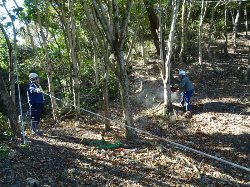 木の伐採は 楽しい作業・・・うみべの森_c0108460_15362366.jpg