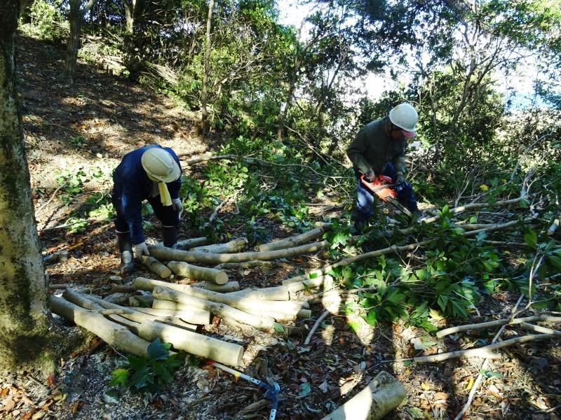 木の伐採は 楽しい作業・・・うみべの森_c0108460_15374618.jpg