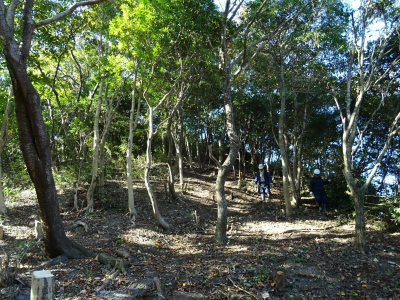 木の伐採は 楽しい作業・・・うみべの森_c0108460_15374767.jpg