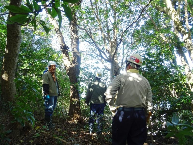 木の伐採は 楽しい作業・・・うみべの森_c0108460_15424909.jpg