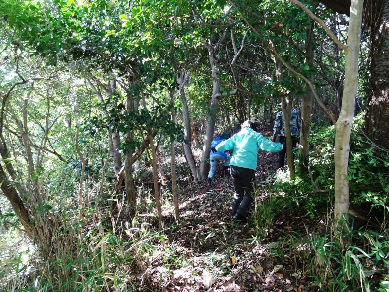 木の伐採は 楽しい作業・・・うみべの森_c0108460_15424985.jpg