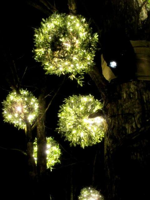 ハルニレテラス「幸せが灯る街」* やどりぎのイルミネーション♪_f0236260_01204412.jpg