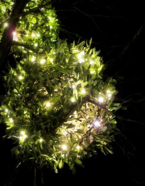 ハルニレテラス「幸せが灯る街」* やどりぎのイルミネーション♪_f0236260_01213484.jpg