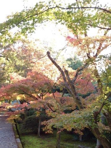 京都東山南部紅葉たより_b0153663_12434152.jpeg
