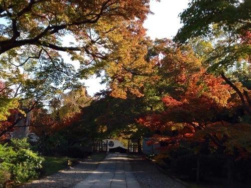 京都東山南部紅葉たより_b0153663_13031857.jpeg