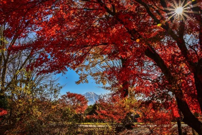 西湖、野鳥の森公園_a0307264_17355710.jpg