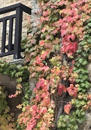 秋な壁、秋な道_a0136671_06202355.jpeg