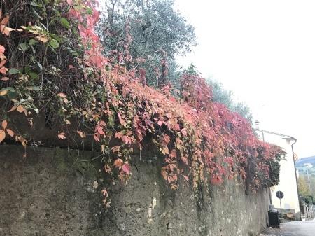 秋な壁、秋な道_a0136671_06215576.jpeg
