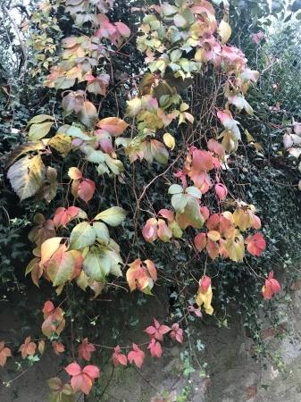 秋な壁、秋な道_a0136671_06222141.jpeg