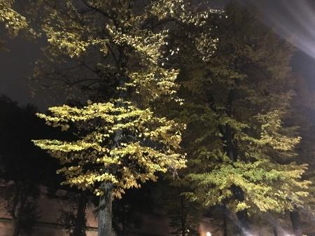秋な壁、秋な道_a0136671_06231770.jpeg