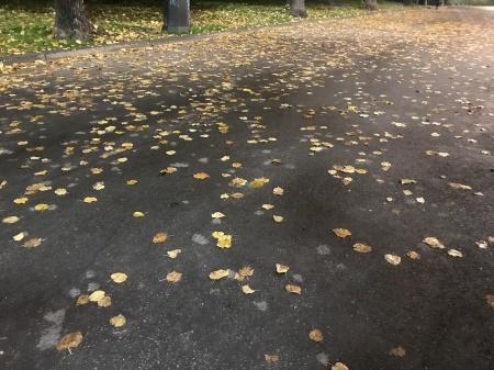 秋な壁、秋な道_a0136671_06233871.jpeg