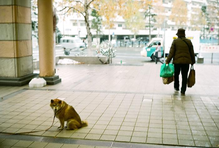 飼い主を待つ老犬_c0182775_164319100.jpg
