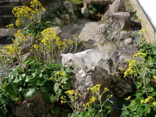猫の森トップ画像コレクション_f0054677_07215306.jpeg