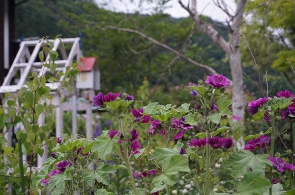 白樺林のお庭_e0365880_20010974.jpg