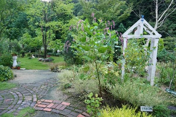 白樺林のお庭_e0365880_20040402.jpg