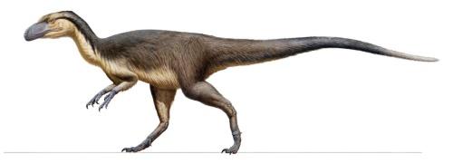 羽毛?恐竜_f0172281_6504848.jpg