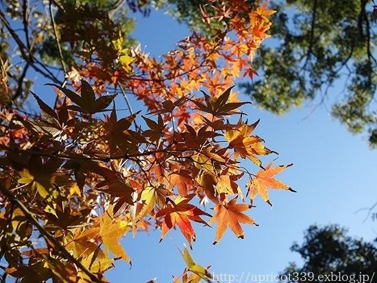 晩秋の庭しごと 低木と宿根草の紅葉_c0293787_16345626.jpg