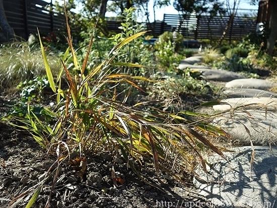 晩秋の庭しごと 低木と宿根草の紅葉_c0293787_16440519.jpg