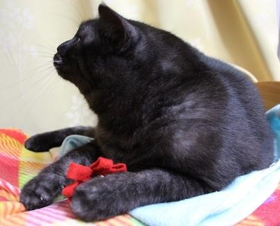 素敵な猫写真を撮るには_a0333195_22014430.jpg