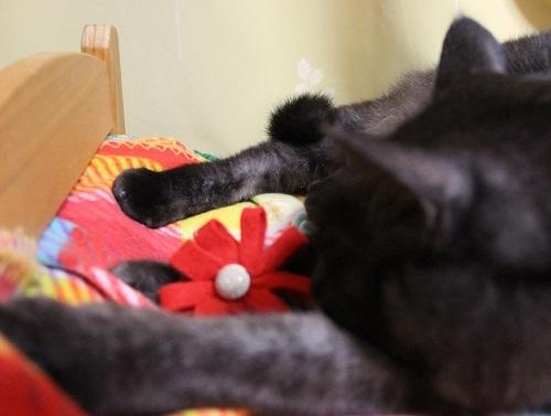 素敵な猫写真を撮るには_a0333195_22015439.jpg