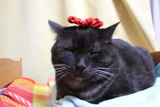 素敵な猫写真を撮るには_a0333195_22060752.jpg